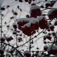 Зимняя ягода. :: Света Кондрашова