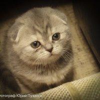 Наблюдательный котёнок :: Юрий Пузанов