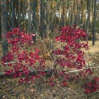 Осенние краски :: Юрий Клишин