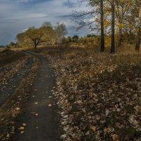 Нас осень красками согреет, в холодный зимний вечерок........ :: Юрий Клишин