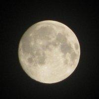 Луна. Луна. :: Елена Шишлянникова