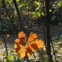 Осенние этюды Фото №2 :: Владимир Бровко