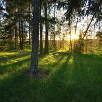 Вечер в лесу :: Юрий Кольцов
