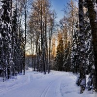 Лыжня :: Viktor Pjankov