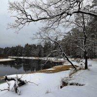 В последних числах декабря... :: Лесо-Вед (Баранов)