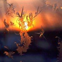 рисует мороз узоры на оконном стекле :: petyxov петухов