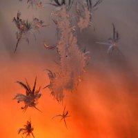 рисует мороз узоры..... :: petyxov петухов