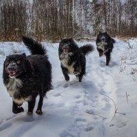 Бег по снегу :: Андрей Дворников