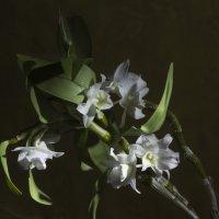 Зимний цветок :: Aнна Зарубина