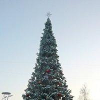 С Рождеством!!! :: Вера Щукина