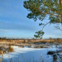 Замерзшее озерцо :: Милешкин Владимир Алексеевич