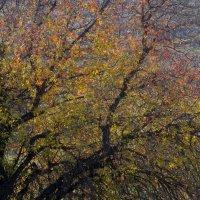 Дерево в декабре :: Александр Деревяшкин
