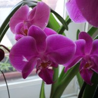 Зимние орхидеи :: Ириша ****