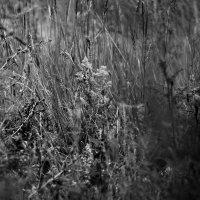 Травы  мои  травы.... :: Валерия  Полещикова