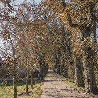 Поздняя осень. :: Marina Talberga