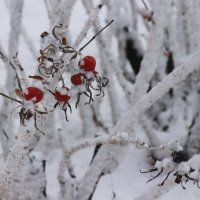 Красное и белое :: Вера Моисеева