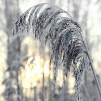 Зимняя нежность :: Инна Малявина
