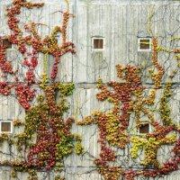 Рисунки на стене :: Ира Балкина