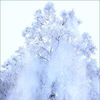Снегурочка пришла!.. :: Кай-8 (Ярослав) Забелин