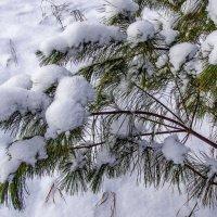 Долгожданный снежок. :: Анатолий. Chesnavik.