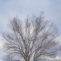 Дерево :: Анатолий Корнейчук