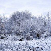 Зима :: Владимир Болдырев