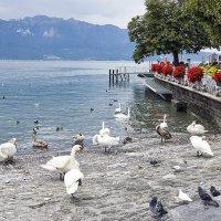Отдых в Швейцарии :: Olga F