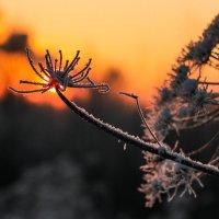 Колючка и солнце :: Светлана Печорина