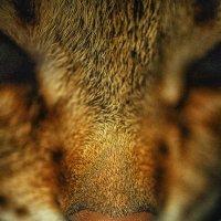 just a cat :: Kristian-V VVVVVV