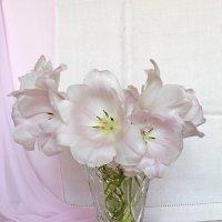 Нежные тюльпаны :: Наталья Кузнецова