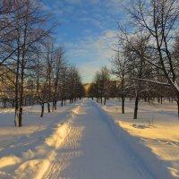 Зимний вечер в парке :: Александр Смирнов