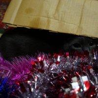 Новогодние праздники :: Оля Сухинина