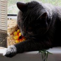 Травку  мы  любим...... и  цветочки... :: Валерия  Полещикова