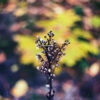 О чем шепчет осень :: Marika Hexe