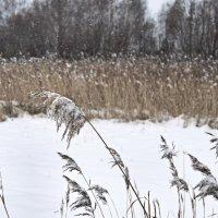 сегодня снежно :: Светлана Бродач