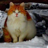 Рыжая красавица :: Светлана