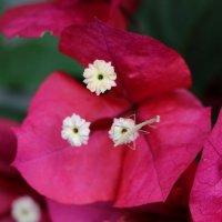 незванный гость в моих цветах :: Natalya секрет