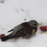 Птичку жалко :: Mariya laimite