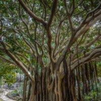 Spain 2015 Canary Gran Canaria Botanic g. :: Arturs Ancans