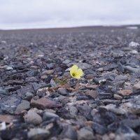 полярная пустыня :: Алексей Логинов
