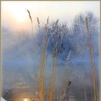 Этюд с тростником :: Мария Кухта