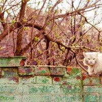 Весна :: Ёжик в тумане
