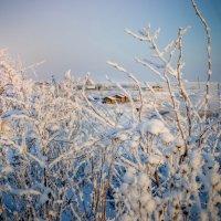 Январские красоты :: Ирина Никифорова