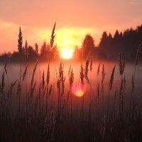 огненный закат :: tatiana lanskaya