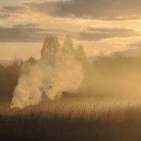 дымная осень :: tatiana lanskaya