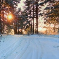 В зимнем лесу :: Павлова Татьяна Павлова