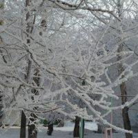 Кружева деда Мороза :: Галина