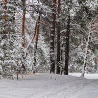 Дождался лес обильных снегопадов... :: Лесо-Вед (Баранов)
