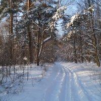 На лыжной прогулке. :: Серж Поветкин