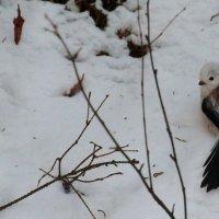 Снежный Длиннохвостик :: Юлия Кучина